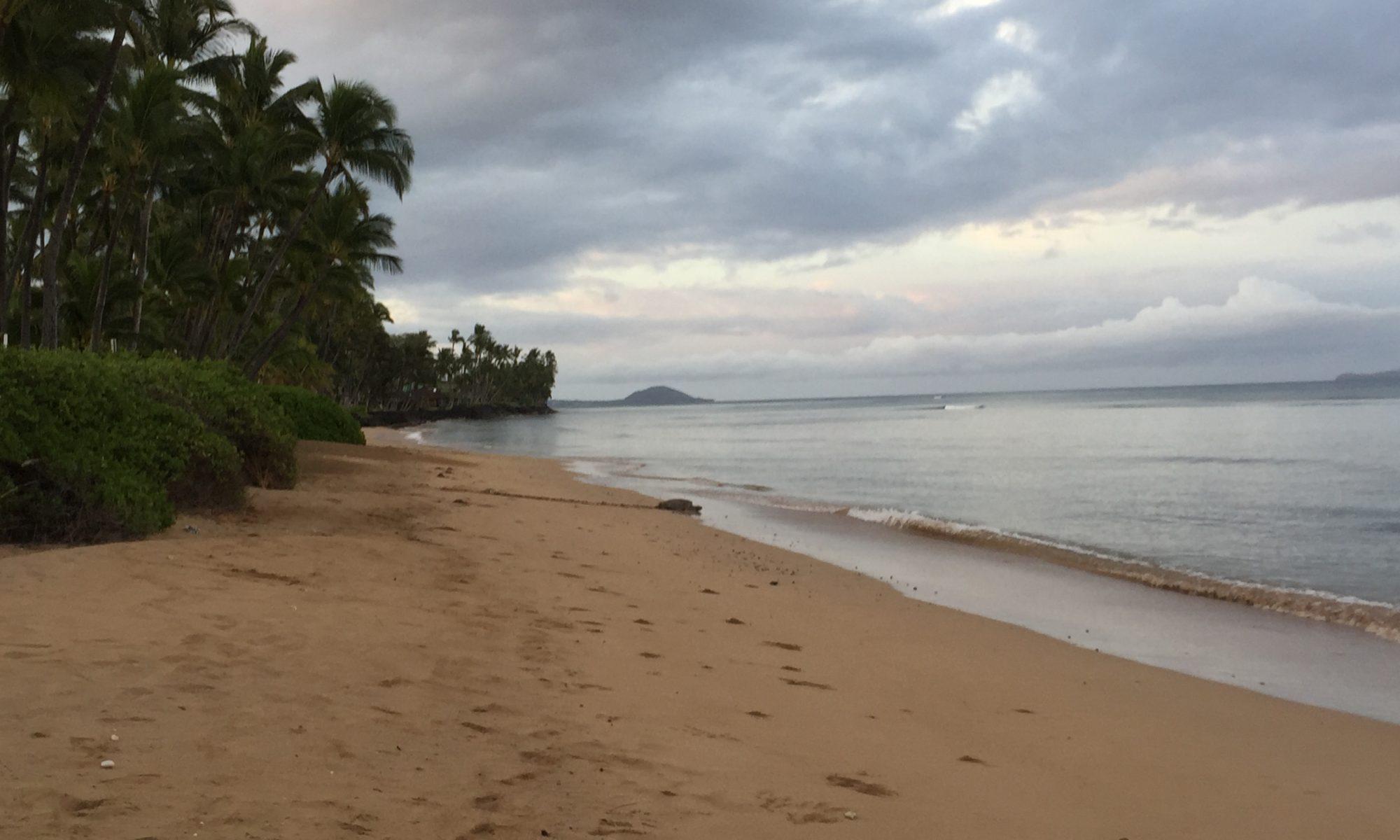 Kihei Beach with Sea Turtle